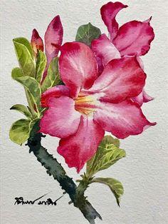 Ti watercolor, Dec 16