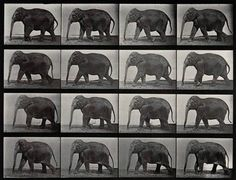 Eadweard Muybridge actual piece of original shrine. this is sacred to me..... elephants never forget.