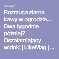 Rozrzuca ziarna kawy w ogrodzie... Dwa tygodnie później? Oszałamiający widok! | LikeMag | We Like You Gardening Gloves, Gardening Tips, Indoor Gardening, My Secret Garden, Garden Plants, Diy And Crafts, Life Hacks, Web Design, Survival