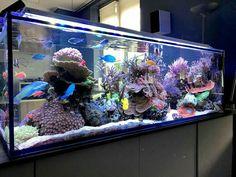 Aquarium Sump, Aquarium Terrarium, Saltwater Aquarium Fish, Home Aquarium, Saltwater Tank, Freshwater Aquarium, Aquarium Ideas, Marine Fish Tanks, Marine Tank