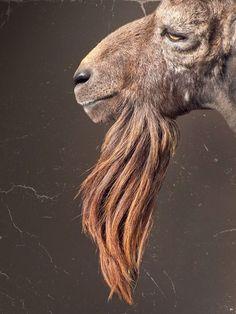 quite a beard