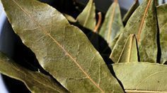 Burn A Few Dried Bay Leaves In Your Home And Feel An Immediate Change To The Atmosphere - Juicing for Health Mental Health Illnesses, Mental Health And Wellbeing, Natural Remedies For Anxiety, Anxiety Remedies, What Is Bay, Burning Bay Leaves, Lack Of Energy, Medicinal Plants, Loosing Weight