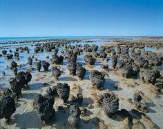 Stromatolithen - eines der Naturwunder Westaustraliens - http://www.reisegezwitscher.de/reisetipps-footer/1456-westaustralien