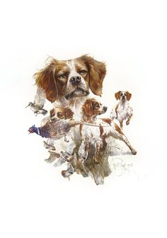 Epagneul Breton Watercolor Print by Valery Siurha, French Brittany Spaniel, Brittany Spaniel Art, Fr Hunting Art, Hunting Dogs, Grouse Hunting, French Brittany Spaniel, Wire Haired Dachshund, Spaniel Puppies, Wildlife Art, Watercolor Print, Dog Art