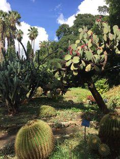 Le jardin des cactus - Palerme