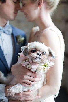 Cutie pie! | http://www.weddingpartyapp.com/blog/2014/08/29/dogs-at-weddings-35-furry-friends/