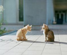 Talking cats...