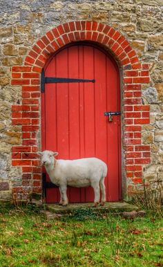 Sheep and red door
