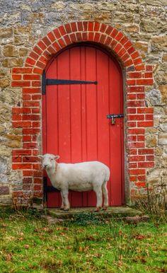 Sheep and red door