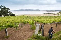 Recorrer las Rías Baixas a través de su ruta del vino