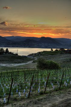 View from Naramata Road West Coast Canada, Canadian Things, Skier, Vancouver British Columbia, O Canada, World View, Wine Country, Sunsets, Places To See