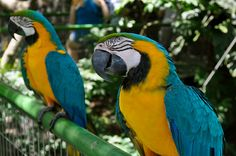 Birds - Bolivia
