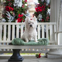 PORCH DOGS: Hey @Susan Spector here's a stinkin' cute Westie!