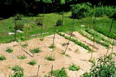 Organic weed control - mulching with straw and newspapers. #gardening #sustainability #organic
