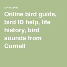 Online bird guide, bird ID help, life history, bird sounds from Cornell
