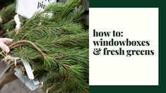 It's Spruce Top Season! Join us for a wild ride through all the fresh greens in stock at Tonkadale this year. Learn how to make your own winter window box, a. Christmas Urns, Indoor Christmas Decorations, Natural Christmas, Outdoor Christmas, Merry Christmas, Xmas, Fresh Green, The Fresh, Winter Window Boxes