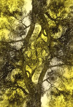 Wood upside down Digital Art Travel Ads, Saatchi Online, Photo Manipulation, Letterpress, Amazing Art, Retro Fashion, Photo Art, Cool Photos, Art Photography