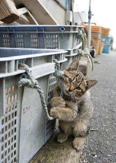 Tashirojima street cats, Japan