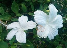 biele kvety - Hledat Googlem