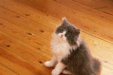 Removing Cat Urine from Carpeting and Furniture  -- (vinegar)