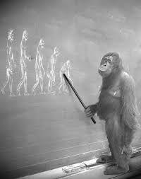 """Résultat de recherche d'images pour """"evolution homme"""""""
