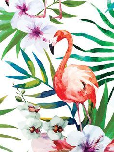 Tropical Flamingo Mais