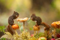 Adorable-Action-of-Beautiful-Squirrels