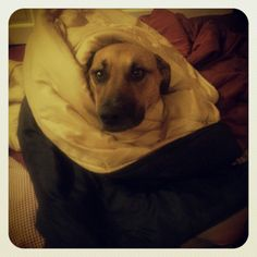 puppy burrito