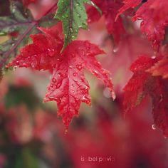Isabel Pavía | It's autumn time