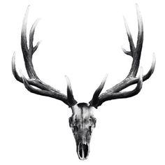 Elk Skull Tattoo