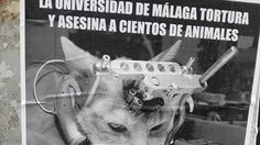 Petition · The animal expirementacion center on the campus of Teatinos in Malaga and others like must closed. · Change.org