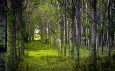 HDQ Images forest picture by Wadsworth Longman (2017-03-12)