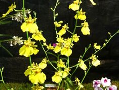Orchids, Orchideen, Orquídeas
