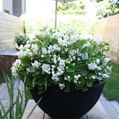 12 plantas que purificam o ar da sua casa e ainda deixam tudo mais bonito
