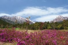 Mount Kumgang. Located in Kangwon-do, North Korea, Mount Kumgang stands at 1,638 metres (5,374 ft).