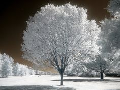 a tree among trees by zachstern, via Flickr