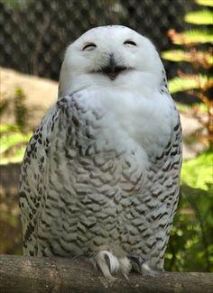 写真: Wine Corker, Owl Pictures, Snowy Owl, Beautiful Morning, Baby Owls, Owl Art, Birds Of Prey, Hogwarts, Cute Animals