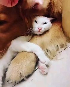 Cute Little Animals, Cute Funny Animals, Funny Dogs, Cute Cats, Cute Animal Videos, Cute Animal Pictures, Crazy Cats, Animals Beautiful, Animals And Pets