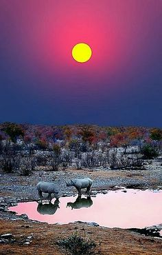 Black Rhinos, African Sunset