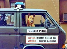 Military Working Dogs, Military Police, American History Lessons, Police Cars, Law Enforcement, Air Force, Vehicles, Guard Dog, Police