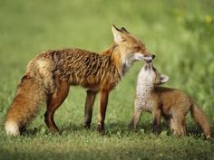 Animal Mother and Baby Names, Free Online iPad Friendly Mother's ...