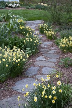 Residential Spaces - Colorblends® Planting Bulbs, Daffodils, Spring, Garden Design, Cottage, Island, Landscape, Spaces, Outdoor Decor