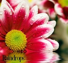 Raindrops Fragrance Oil | Buy Wholesale at Just Scent Candle and Soap Supplies | Fragrance Oils