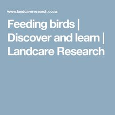 Feeding birds | Discover and learn | Landcare Research