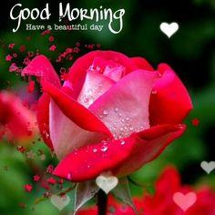 Good Morning Romantic, Cute Good Morning Images, Good Morning Beautiful Pictures, Good Morning Roses, Good Morning Inspiration, Good Morning Images Download, Good Morning Picture, Good Morning Gif, Good Morning Greetings