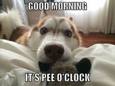Good morning - dog meme - http://www.jokideo.com/good-morning-dog-meme-2/