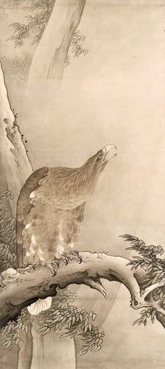 Eagle on a Tree. 鷲図 Japanese Hanging scroll. Meiji era. about 1880s–1890s. Hashimoto Gahô (Japanese, 1835–1908)