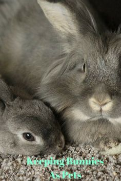 Want your own Easter Bunny? Learn how to care for them and keep them very...hoppy.