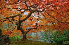 Portland's Japanese Garden, Oregon