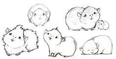 Some more guinea pig drawings